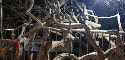 Trees at Nidhivan